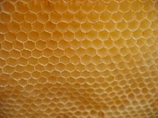 apiculteur_4